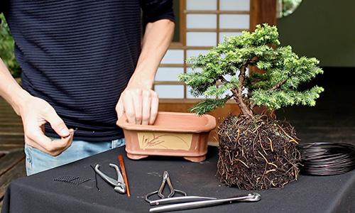 Jak stworzyć drzewko Bonsai