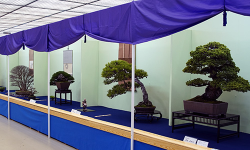 Wystawa Taikan Ten 2018
