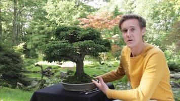 Uprawa I Pielęgnacja Drzewek Bonsai Bonsai Empire