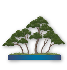 Las Bonsai